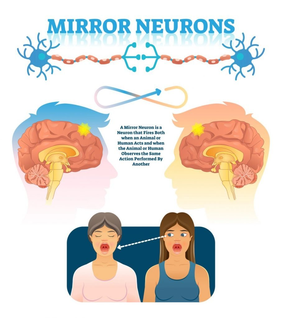 mirror neurons illustration