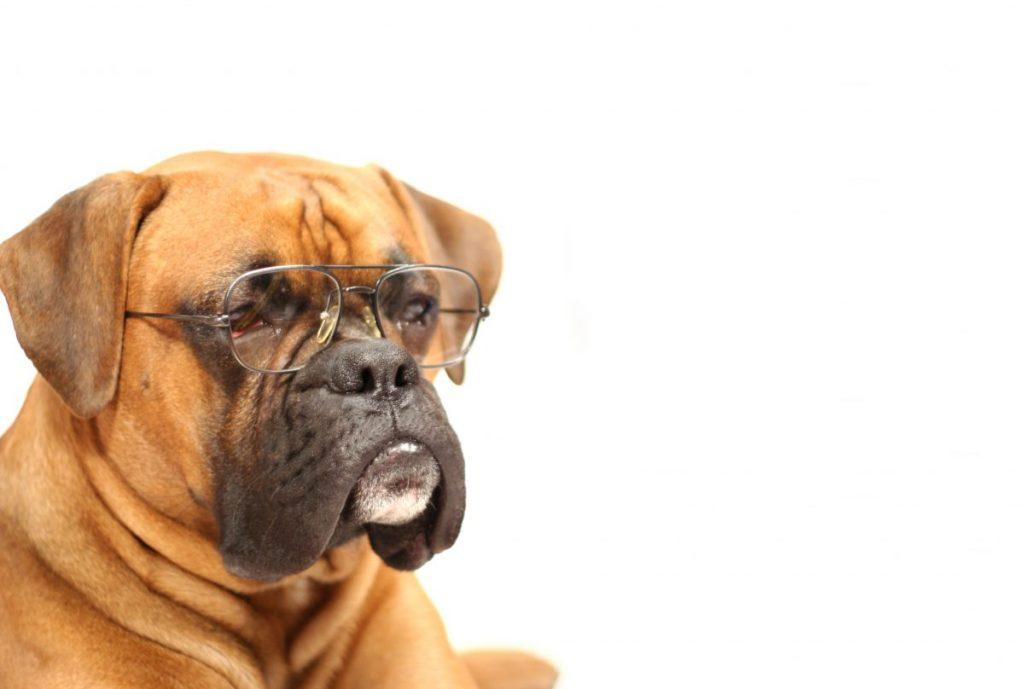 Dog glasses good vision