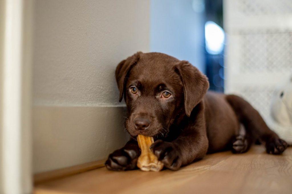 dog reward chews clean teeth