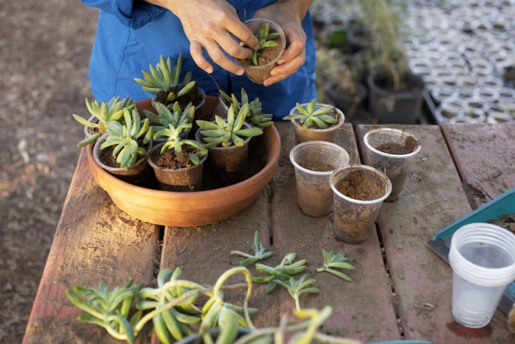 succulents in terracotta pots