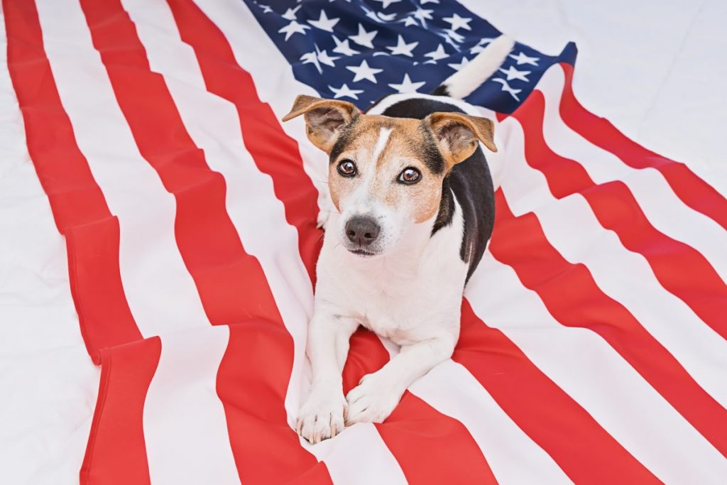 Terrier on the Americas flag