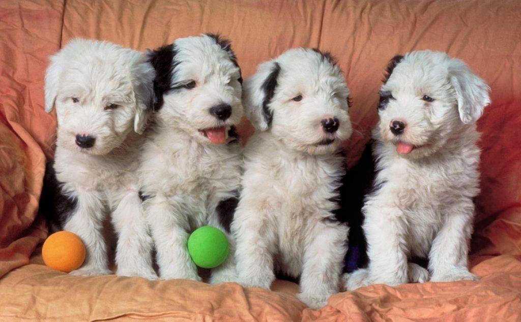 Start training as puppies