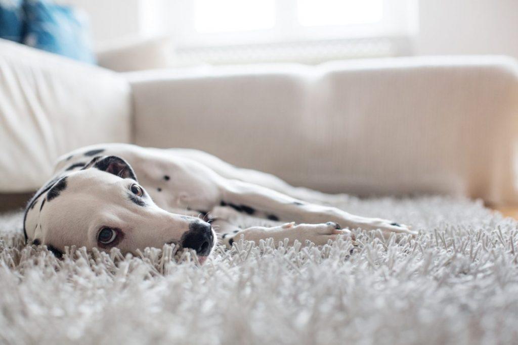 dog avoid quiet