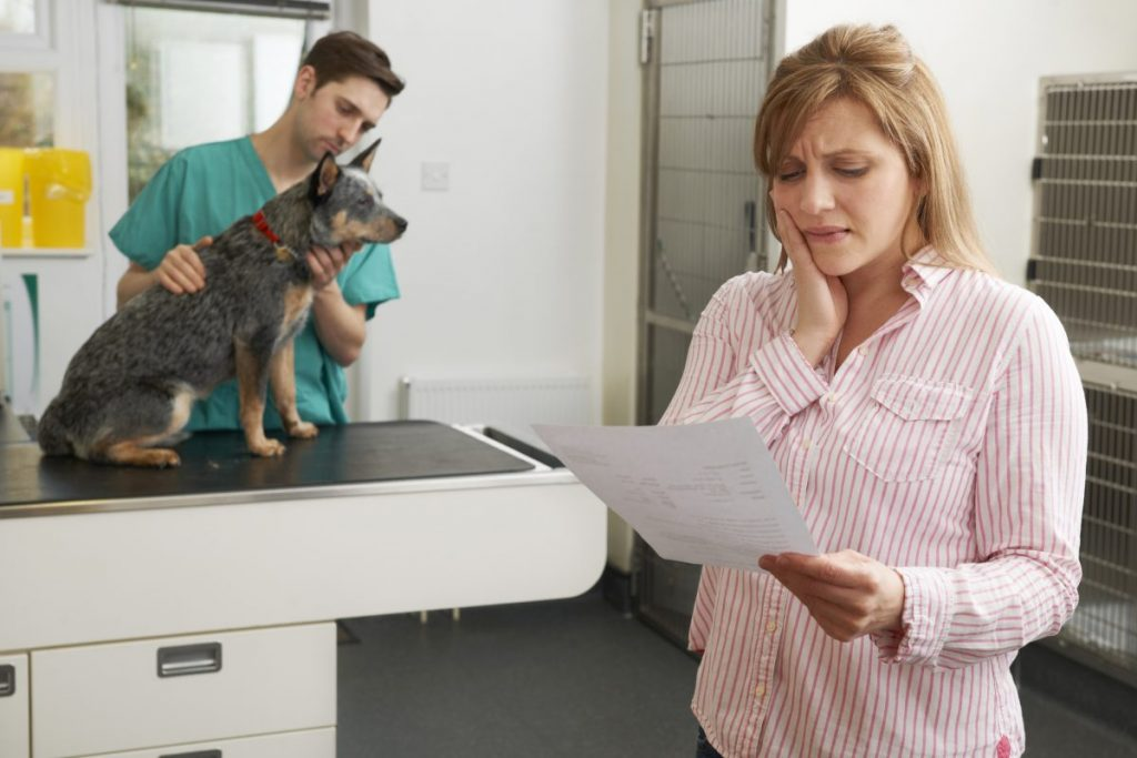 dog treatment cost veterinary expensive