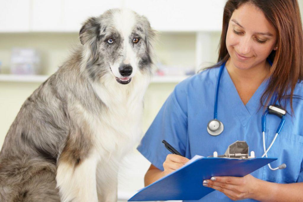 Dog check-up at veterinarian office
