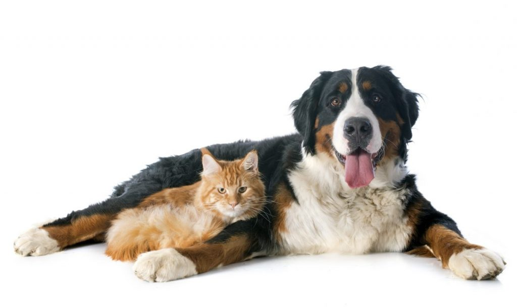 Dog Cat Pets