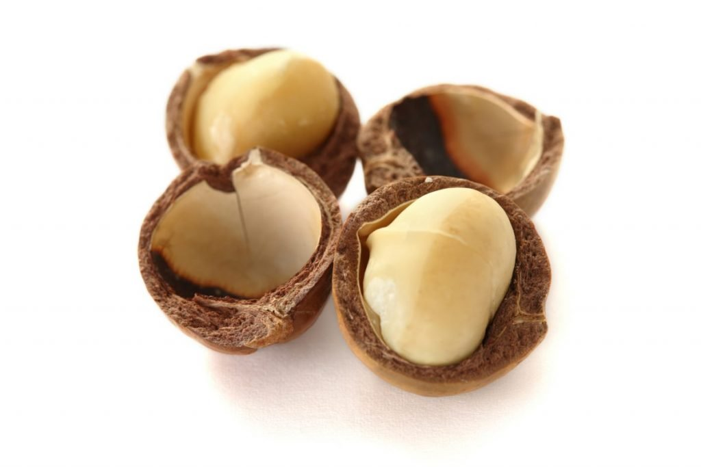 macadamia nuts dogs poisonous
