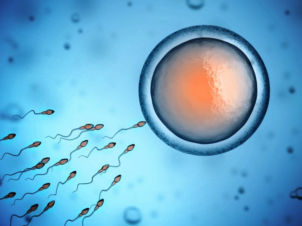 Sperm Egg Fertilization