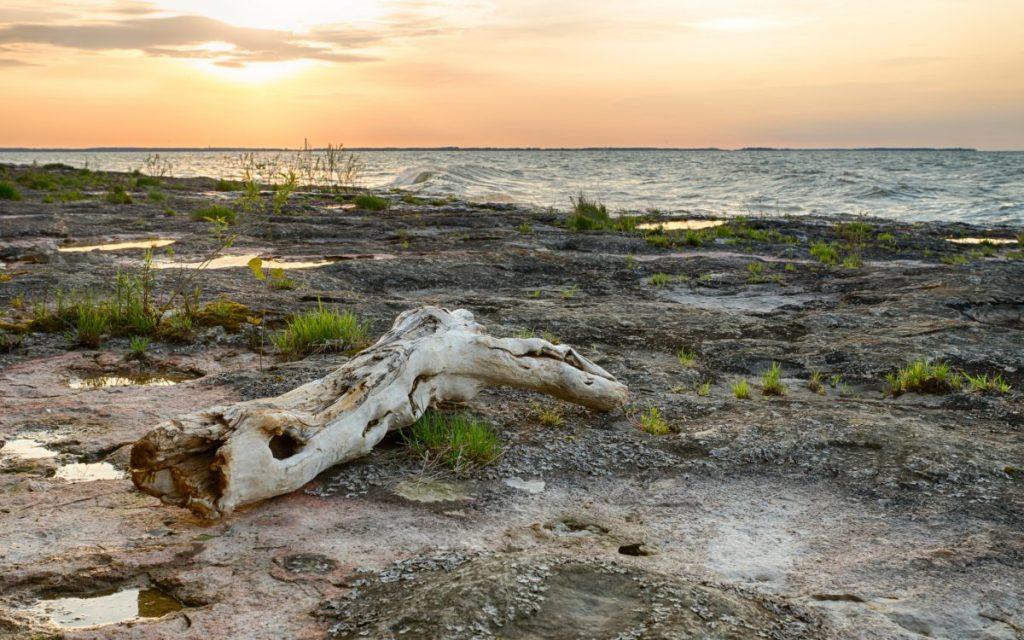 Kelleys Island Nature Preserve