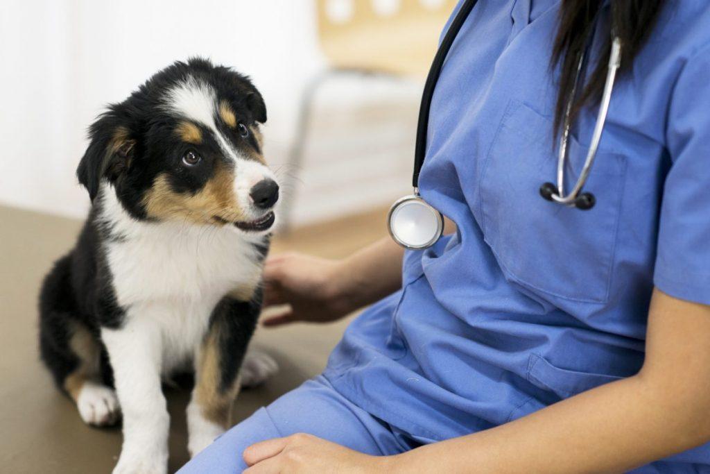 veterinarian dog infected