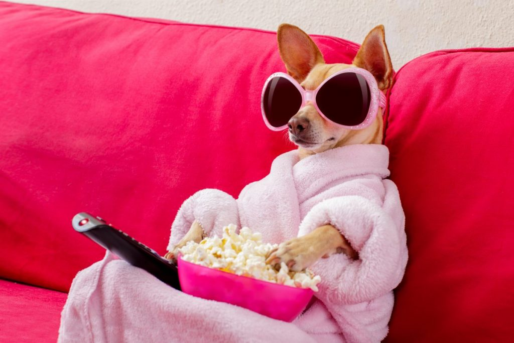 dog popcorn couch sunglasses