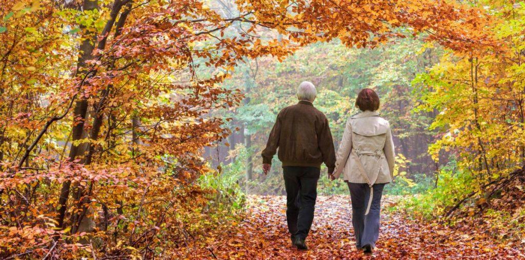 Autumn Hike Leaves
