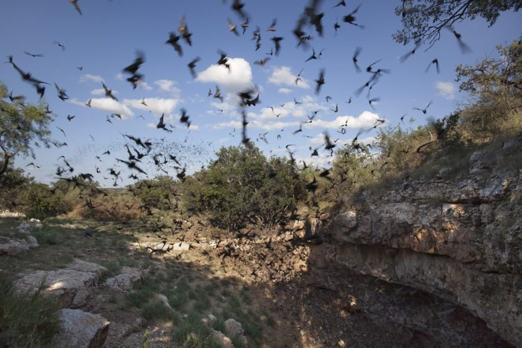 Bats flying outside cave