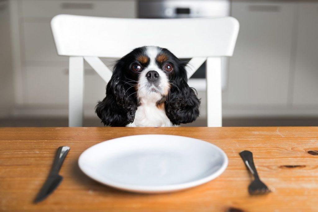 Empty stomach dog yellow vomit