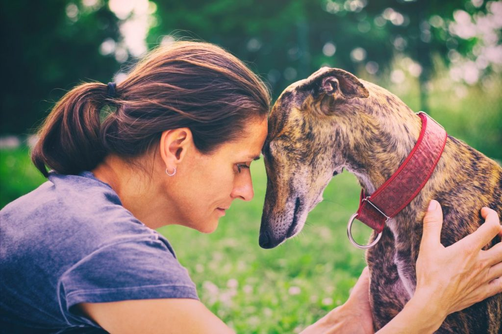 Woman and greyhound sharing affection