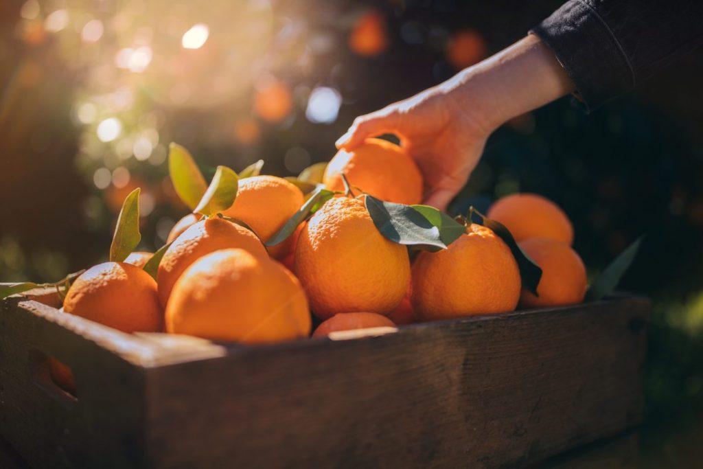 Fruit Citrus Vitamin C