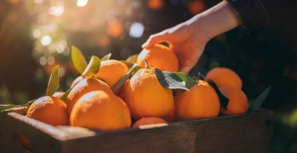 Tips on Maintaining a Low-Purine Diet for Gout