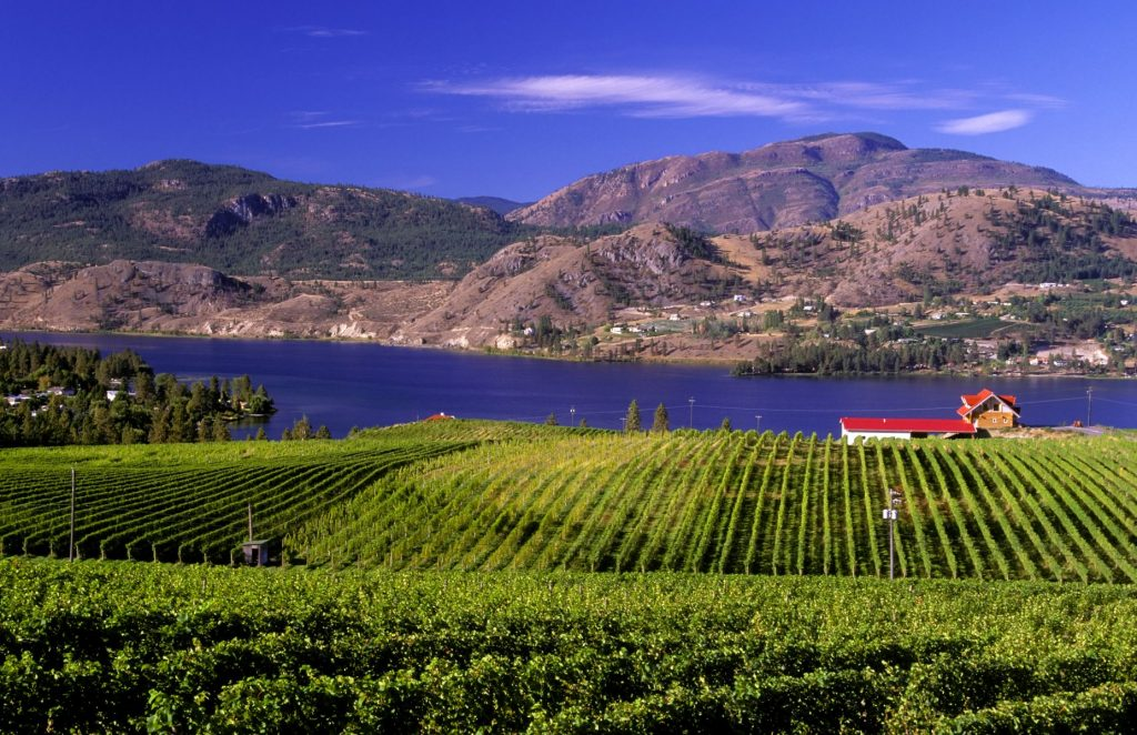 vineyard on skaha lake located in the okanagan near penticton