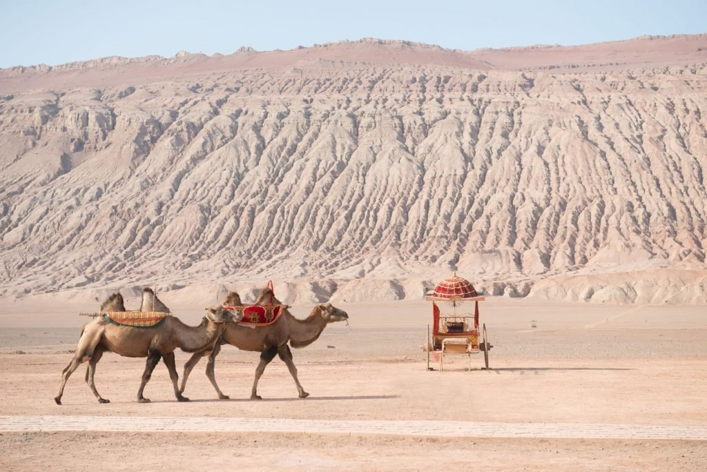 Camels at Flaming Mountains or Gaochang Mountains are barren, eroded, red sandstone hills in Tian Shan Mountain range, Xinjiang, China