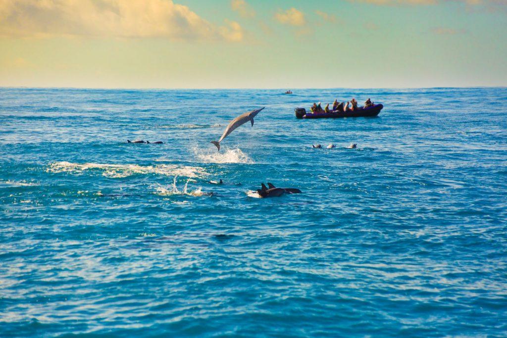 a pod of spinner dolphins in the Hawaiian island, photo taken in the Na Pali Coast of the island of Kauai, Hawaii