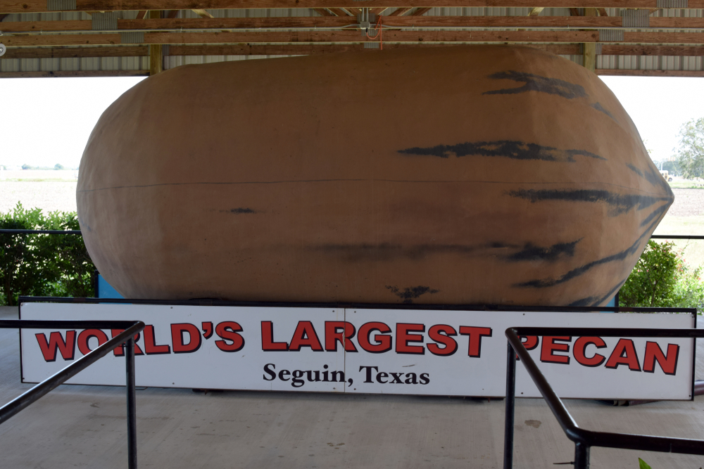 World's largest pecan statue on display at the Texas Agricultural and Heritage Center