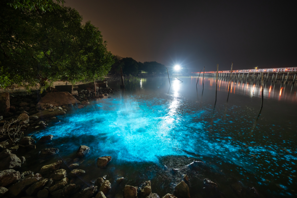 Bioluminescent Plankton Light Up the Sea,