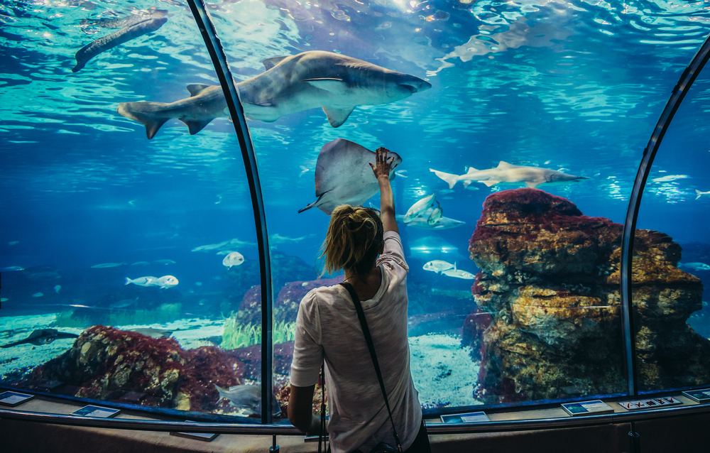 Woman looks at shark in Barcelona Aquarium