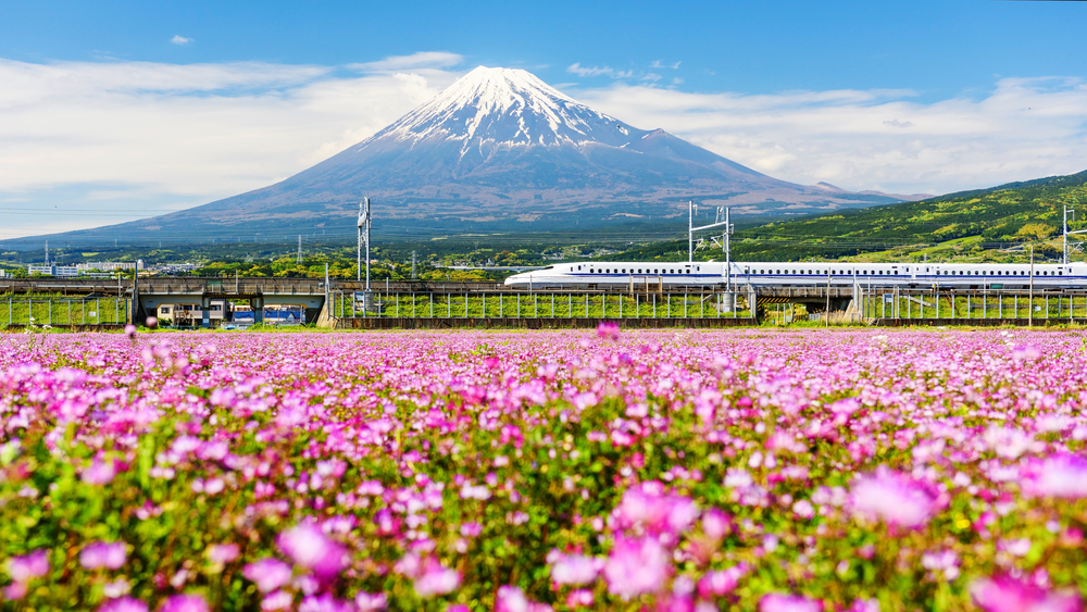 Shinkansen or Bullet train run pass through Mt. Fuji and Shibazakura at spring. Shinkansen, super high speed railway, operated by Japan Railways companies