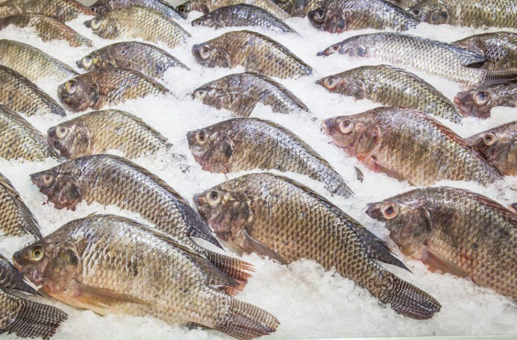 tilapia ice seafood