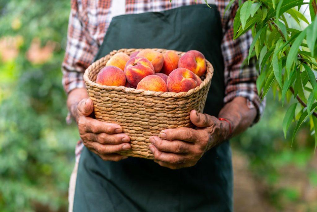 peaches, moderation, vitamins, sugar