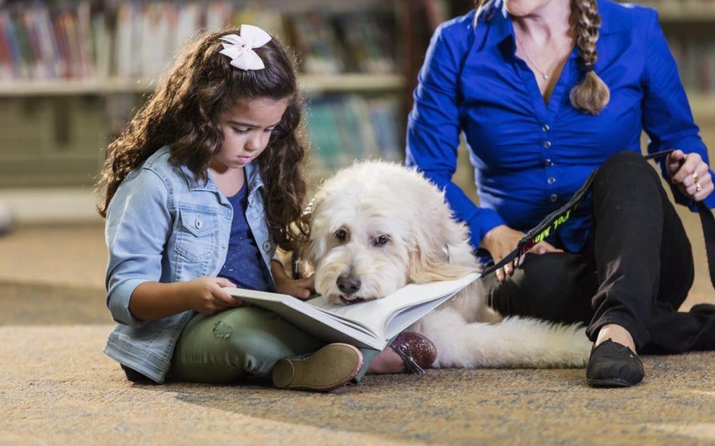 dogzheimers children discussion dog