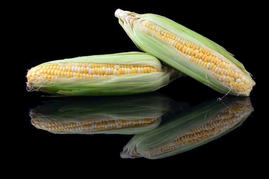 white yellow corn
