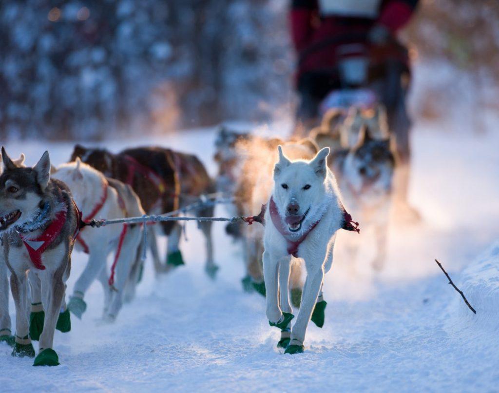 Beargrease dogsled race