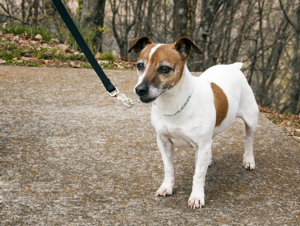 physical help dementia dog