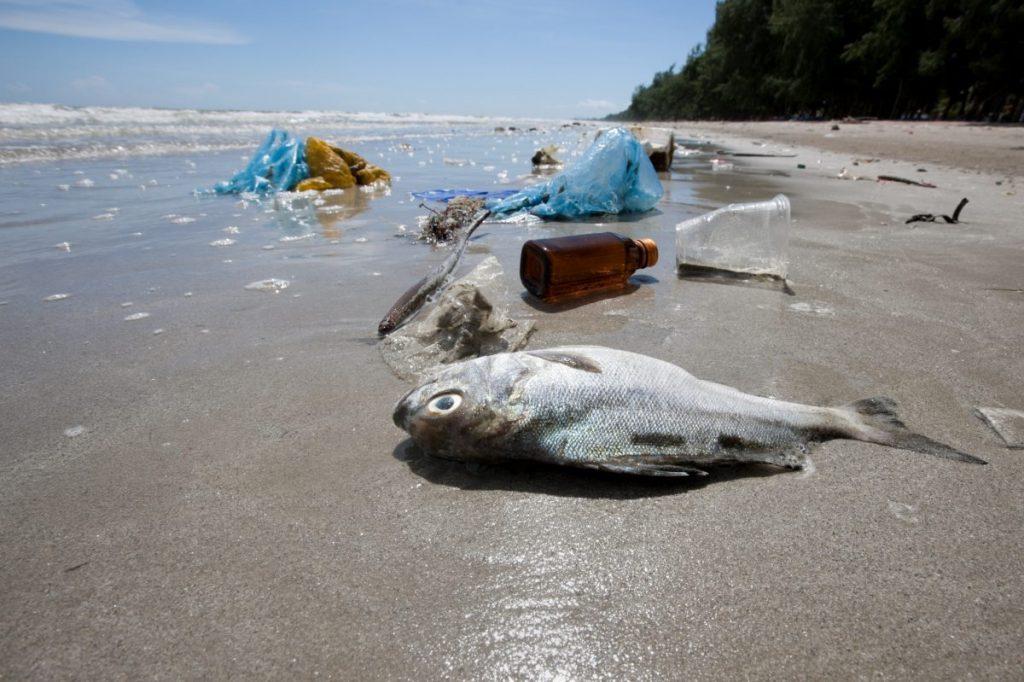 plastic bags beach dead fish