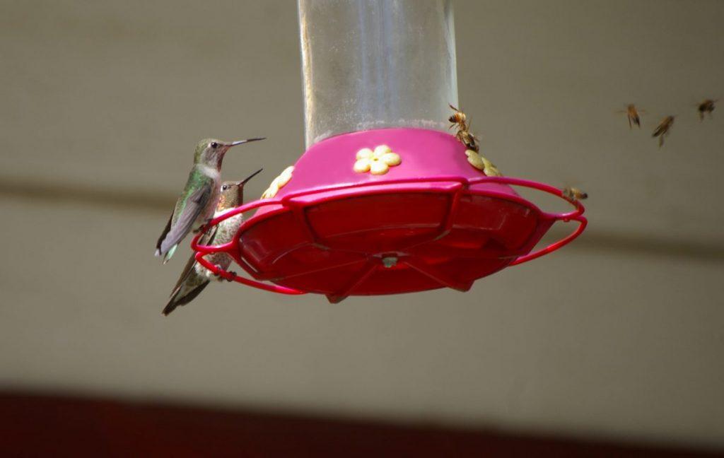 bees hummingbird feeder