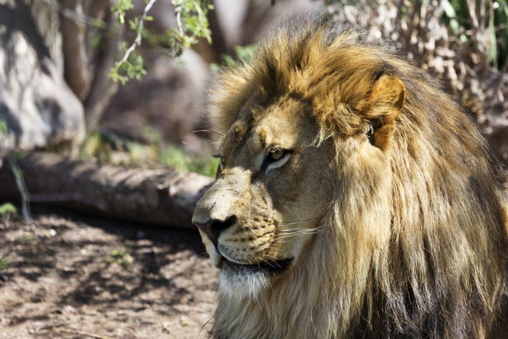 Phoenix Zoo Scottsdale