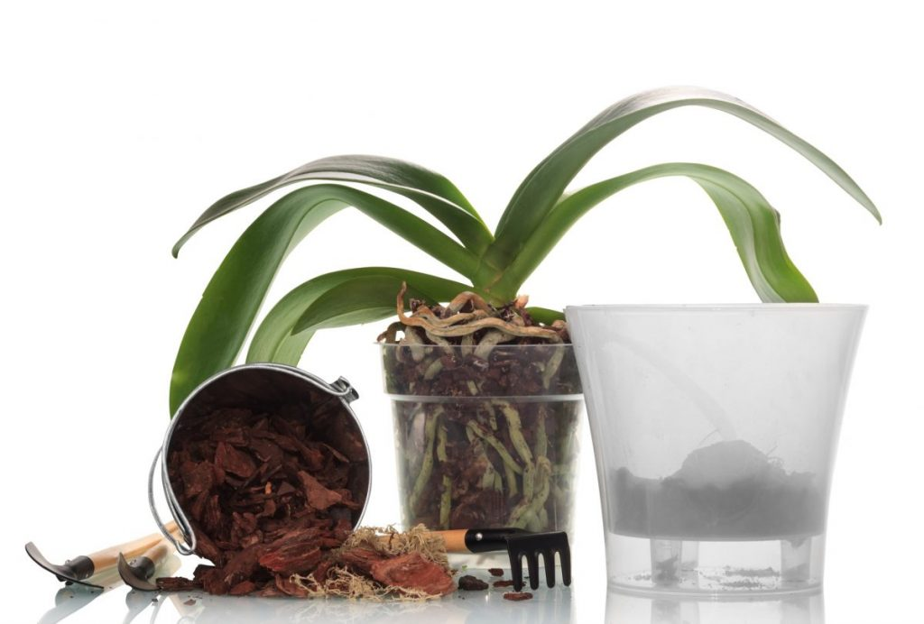 repotting orchid bark growing media