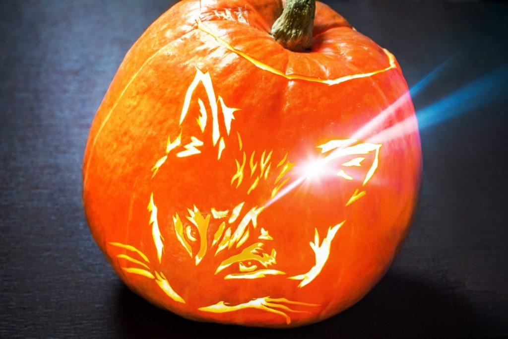 traditional pumpkin cat