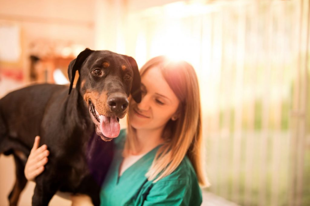 doberman pinscher vet exam disease