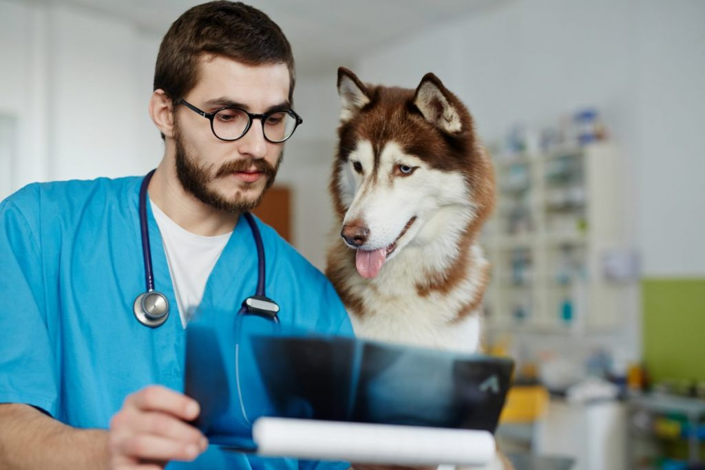 dog veterinarian imaging test diagnosis