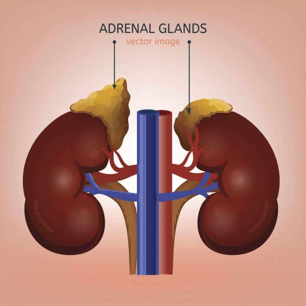 Hyperplasia hyperactive-adrenal