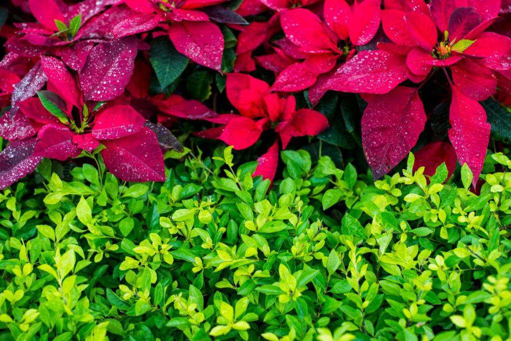 transplant outdoor garden