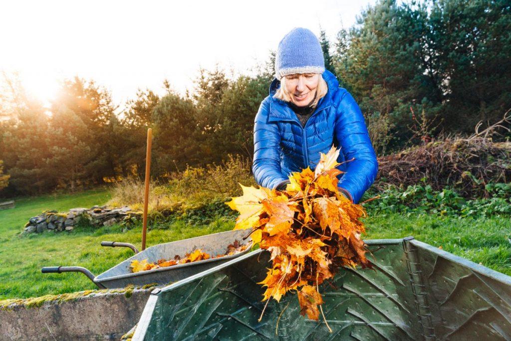 leaves, shredded, maple, oak, acidity
