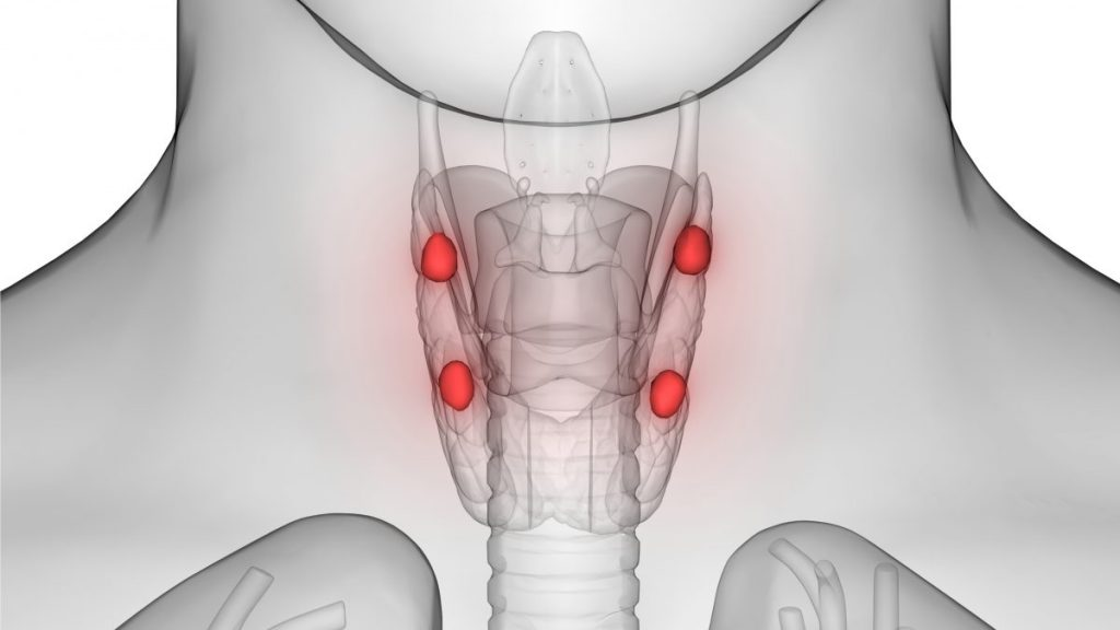 Image of the parathyroid glands