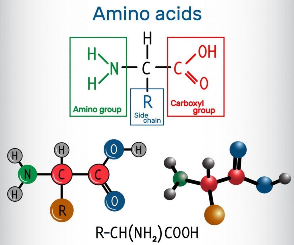 general formula amino acids
