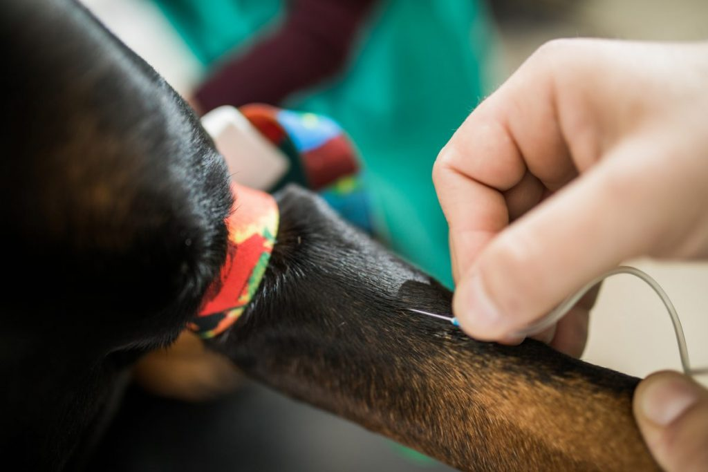 veterinarian blood tests