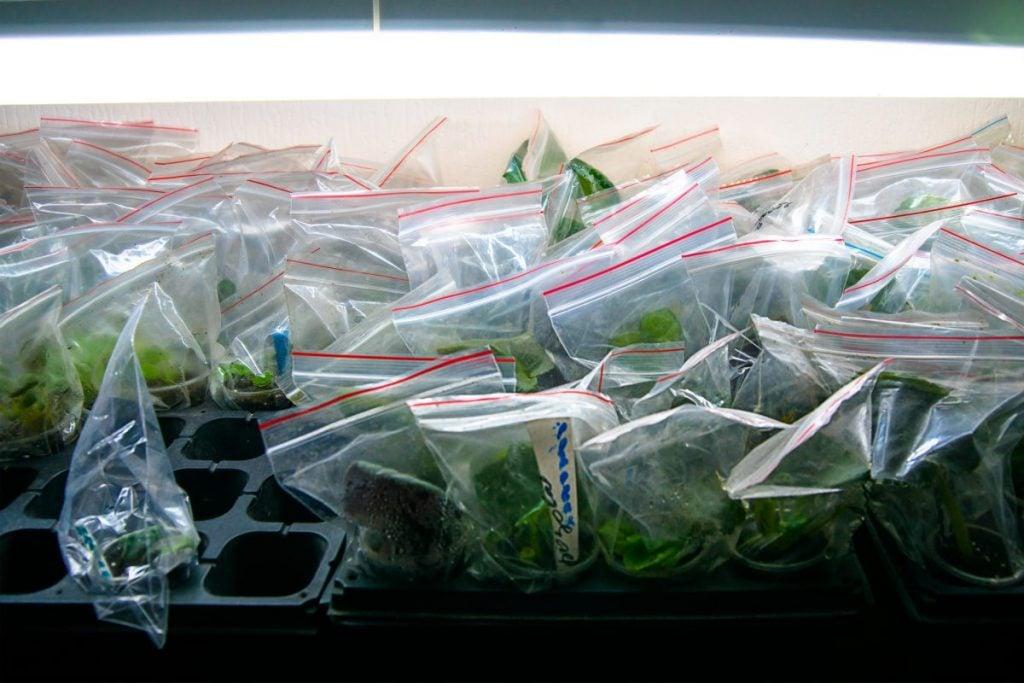 propagating soil new plant