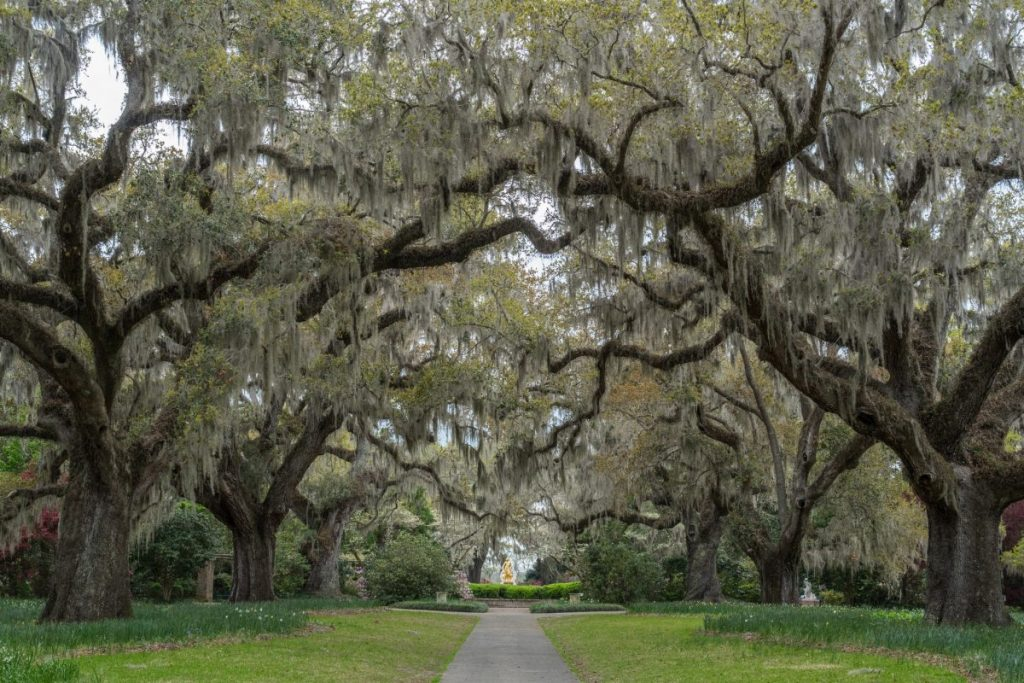 Brookgreen Gardens Tree