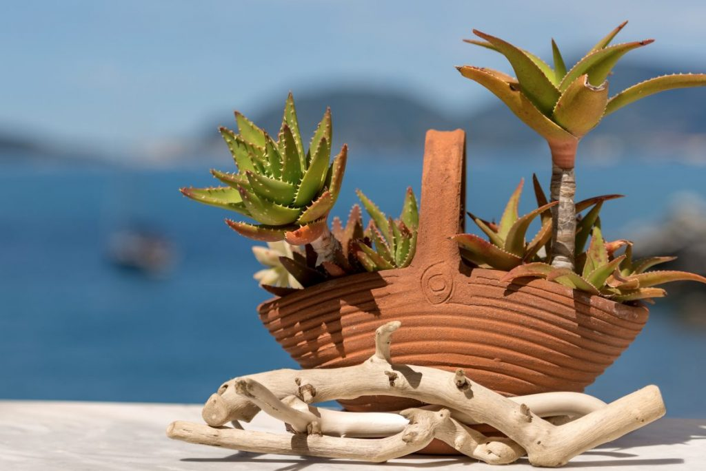 terra cotta clay planter aloe